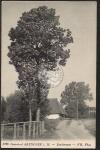 Ostseebad Arendsee Dorfstrasse großer Baum