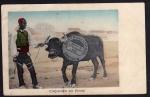 Wasserbüffel mit Führer 1918